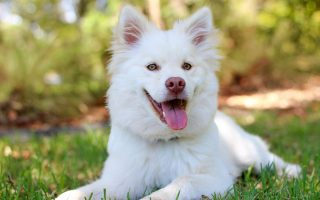 Medipets CBD CBD for Dogs